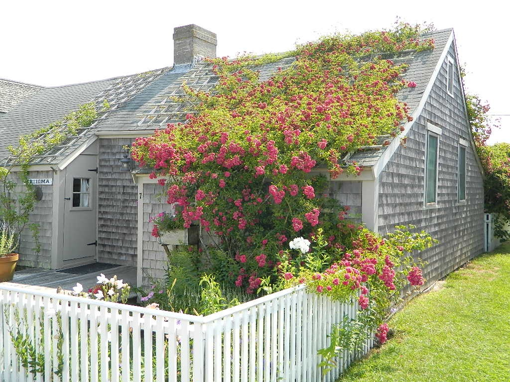 A Rose Covered Cottage