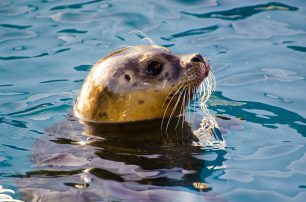 Where To See Seals on Nantucket