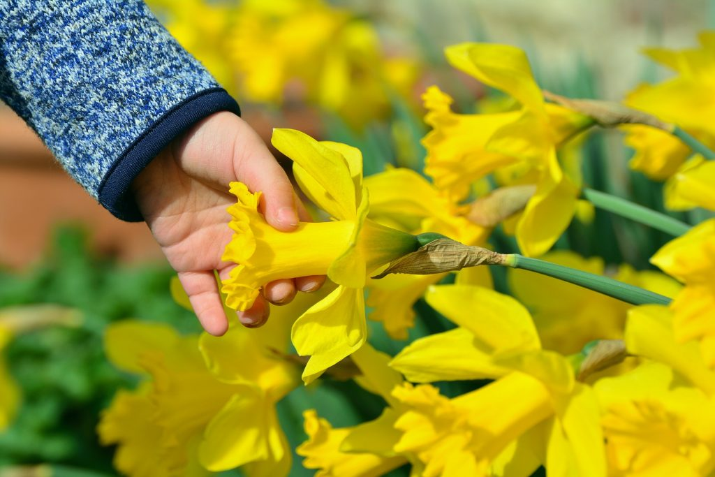Top 5 – Daffodil Festival Activities
