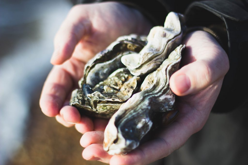 How To Shuck and Serve Oysters on a Half Shell